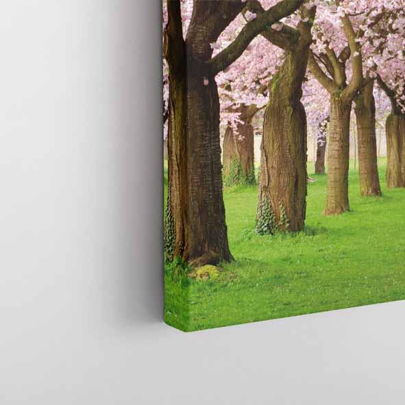 Pembe Dut Çiçeği Kanvas Tablo-Y079