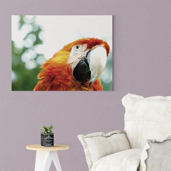 Sevimli Papağan Kanvas Tablo-y269