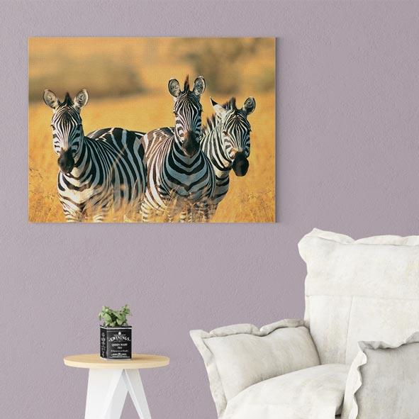 Zebra Temalı Kanvas Tablo-Y110